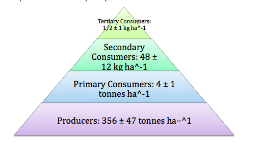 Tropical Rainforest's Energy Pyramid. 2010. Buzzle.com