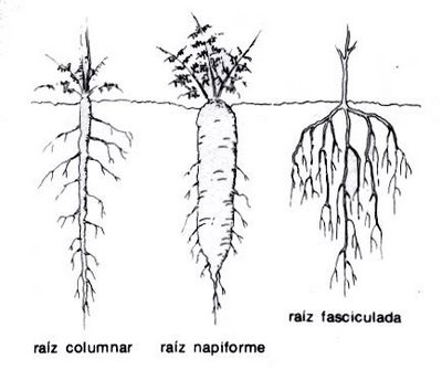 ciencias naturales: tipos de tallos ,hojas y raices