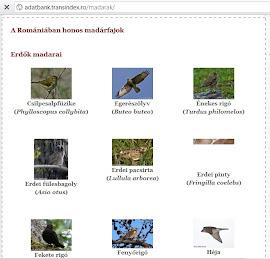 A ROMÁNIAI MADÁRFAJOK ADATBÁZISA    -   Madarak ,birds,pasari, Romania  o baza de date