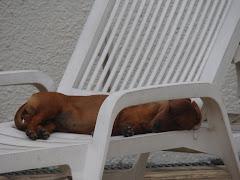 Silêncio... a Bia está dormindo....