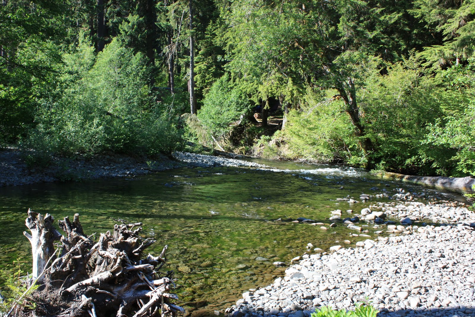 Tracking the Wolfes: Olympic Peninsula Camping Trip