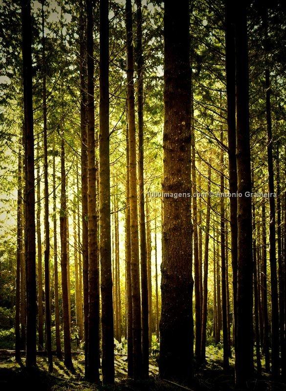 [floresta+luminosa.aspx]