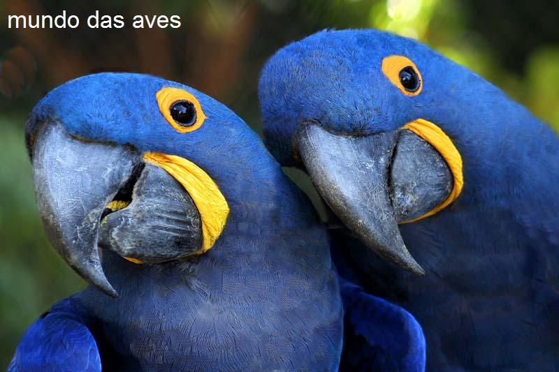 mundo das aves