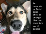 ENLACE PERMANETE A DAVID, EL PERRITO CHILENO VÍCTIMA DEL TSUNAMI