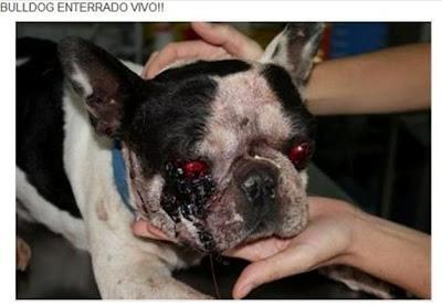 Stop al maltrato animal diciembre 2010 - Perrera de vilafranca ...