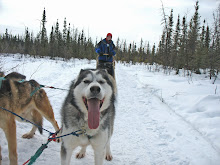 Dog sled ride in Alaska