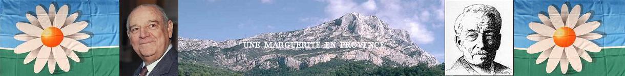 Une marguerite en Provence