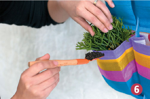 jardim vertical no sol:PETCAMPO AGROSHOP: Monte um jardim vertical em uma sapateira nas dicas