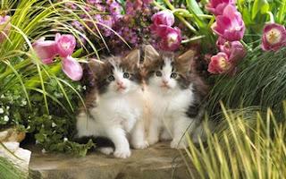 Curious Cat Pair