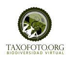 Taxofoto