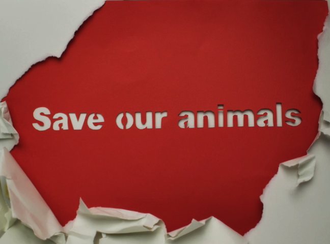 is it right to kill animals for saving our life Thanks to netflix, hulu, hbo, and amazon, many life-changing movies about food and animals are available and easily accessible.