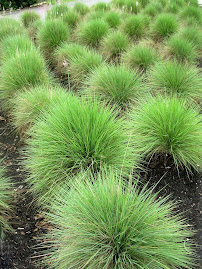 Spiky Green