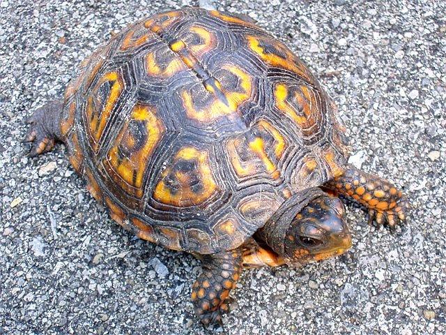 [turtle_back.jpg]