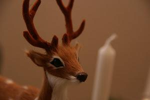 Bambi aus dem Nadelwald