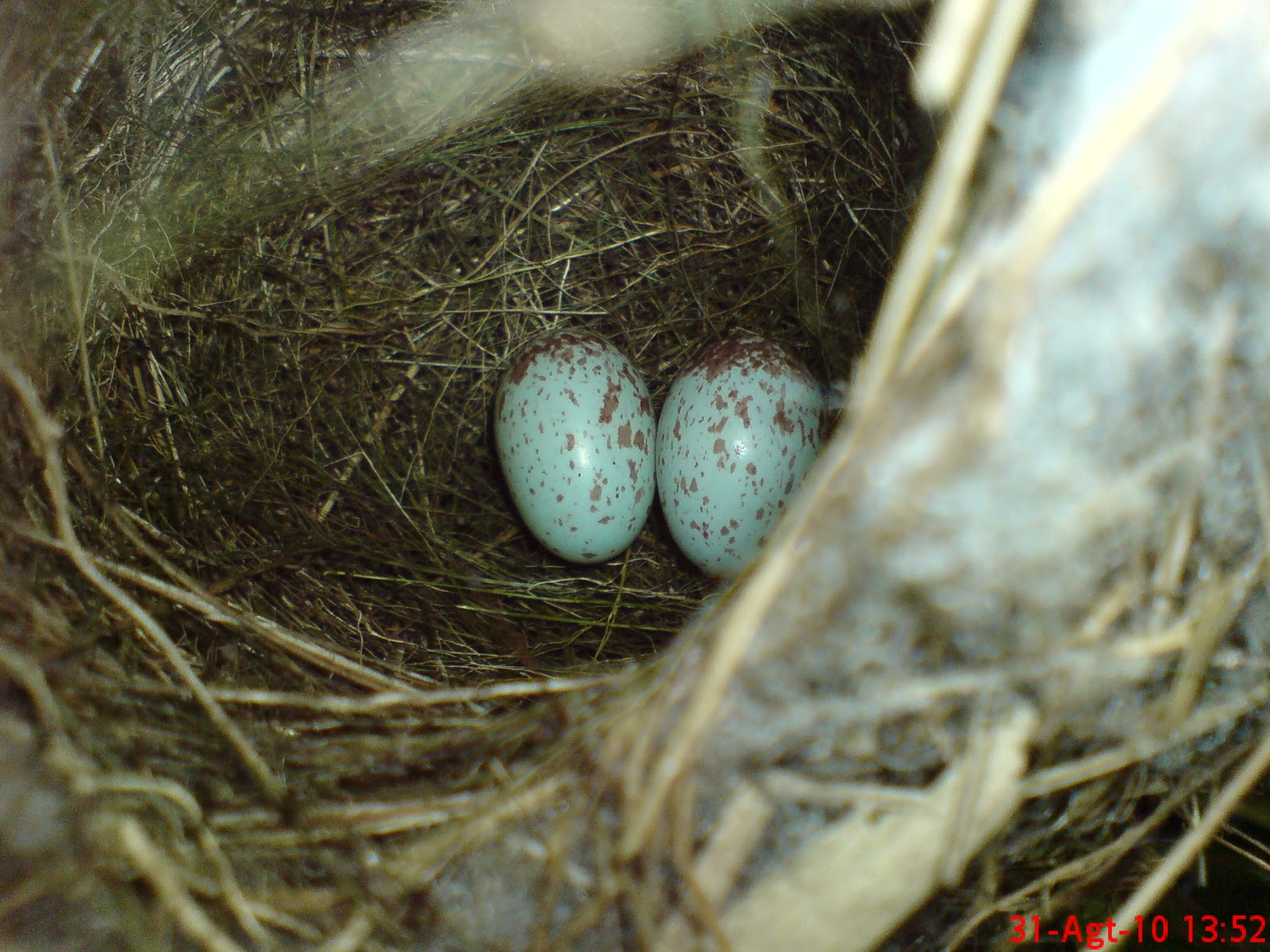 Telur Burung Gambar Pelangi Arsip