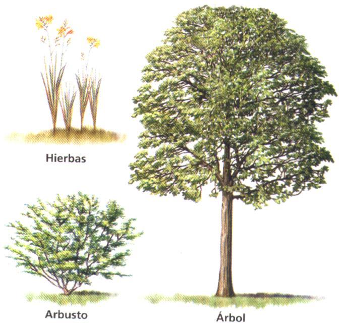 Ciencias for Arboles plantas y flores