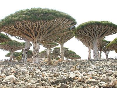 [Socotra_20090119-001.jpg]