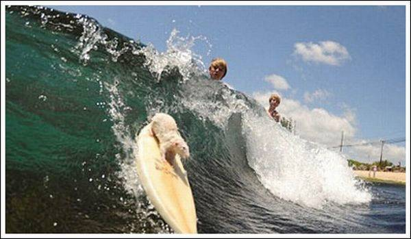 The Smallest Surfer