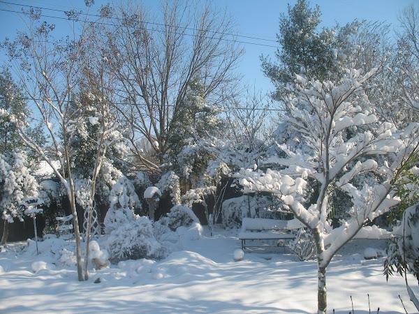 My Snow Garden