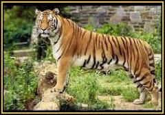 Ashville Zoo