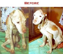 Before Rescue from Neglect