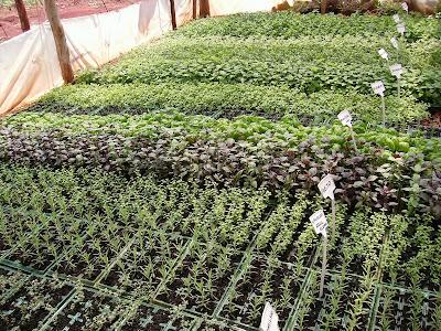 5 plantas aromaticas yahoo dating 2