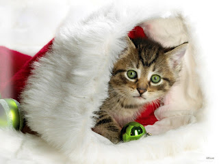 Free Christmas Cards Cat Christmas Cards