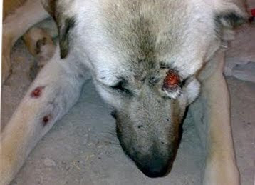 dog fighting injuries cute funny dogs