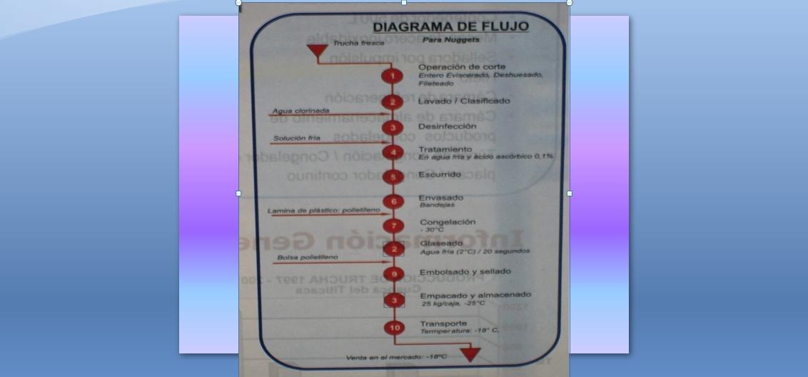 Alevinos Del Valle Org Agroacuicola Trucha Arcoiris Of Manejo De ...