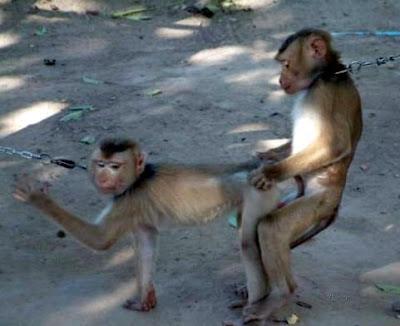 animales haciendo el amor