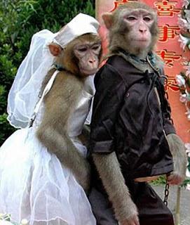 Monos vestidos de novios