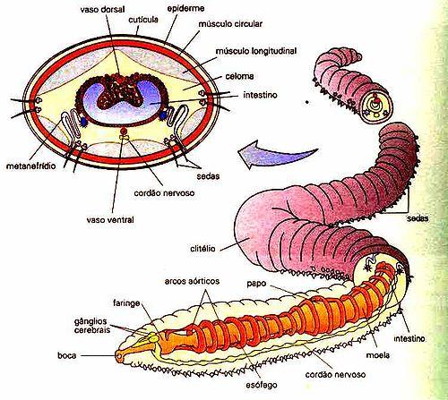 Boa medicina de vermes em crianças