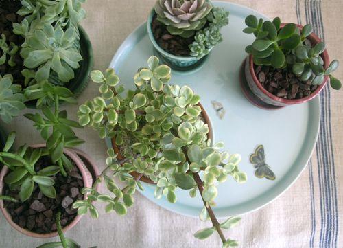 Indoor succulent garden design your revolution - Best succulents for indoors ...