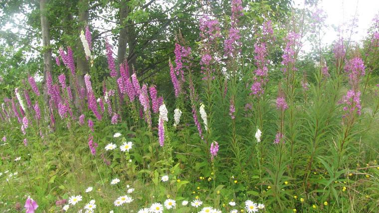 Loving the wild flowers