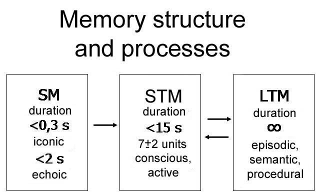Fresh: Session 3: Limitations of Short-term Memory | 638 x 392 jpeg 37kB