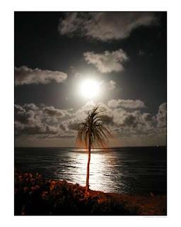 POEMAS SIDERALES ( Sol, Luna, Estrellas, Tierra, Naturaleza, Galaxias...) - Página 5 Lunar+Palm+-+Thomas+Hannsz