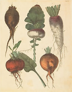 Poster of Turnips and Root Vegetables, courtesy of AllPosters.com