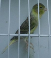 PIA NEVADA