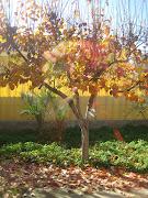Como hojas de otoño otoãƒâ±o