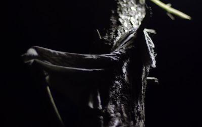 деревья людоеды trees cannibals