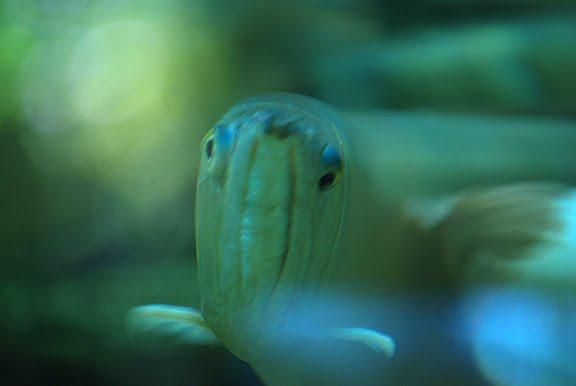 fish skeptic vogon poet рыба вогон поэт скептик