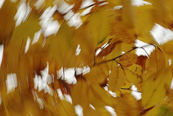 осень желтые листья картинки pictures  autumn fall yellow leaves