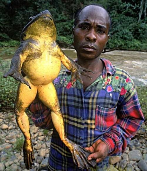 Giant+Frog001 - Do you like curvy women? - Love Talk