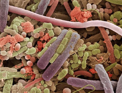 human tongue bacteria