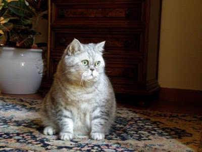 Julie a Fat Cat - New Star of the Internet Seen On  www.coolpicturegallery.us