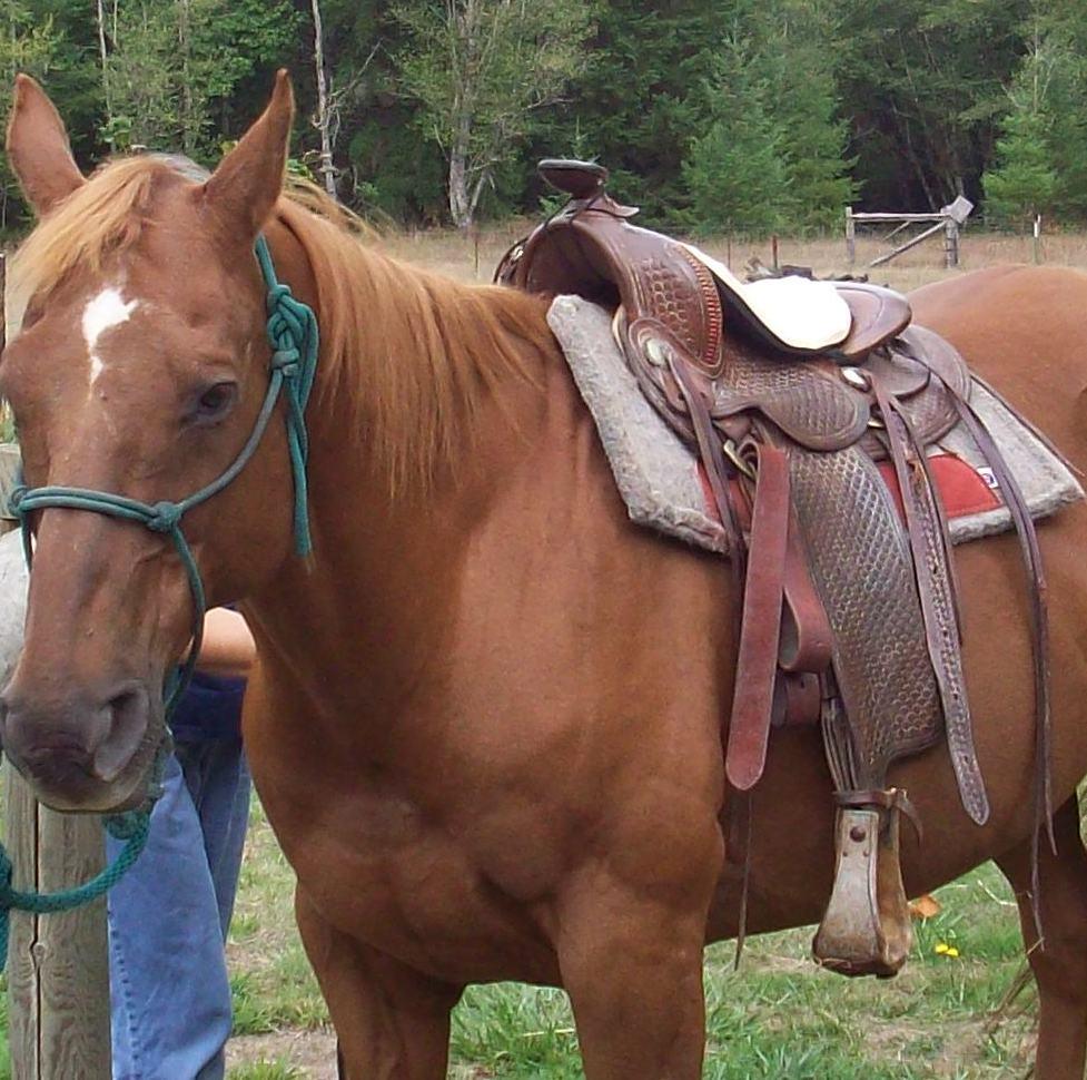 saddle and horse Menu welcomepng tegnérgatan 9, 111 40 stockholm 08-20 30 34  saddleandsabre@gmailcom welcome menu click to expand contents starters   main.