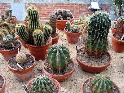 Кактуси / Cactaceae