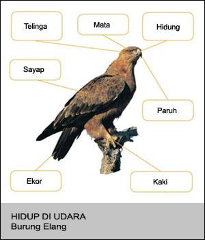 Bagian - bagian Tubuh Hewan