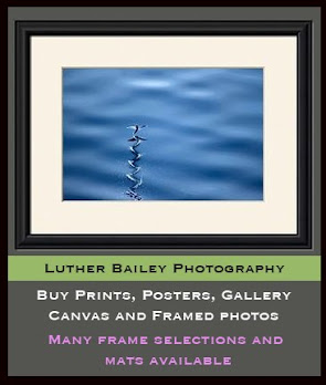Luther Bailey Prints (Click Photo)