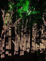 公園の木々のイルミネーション